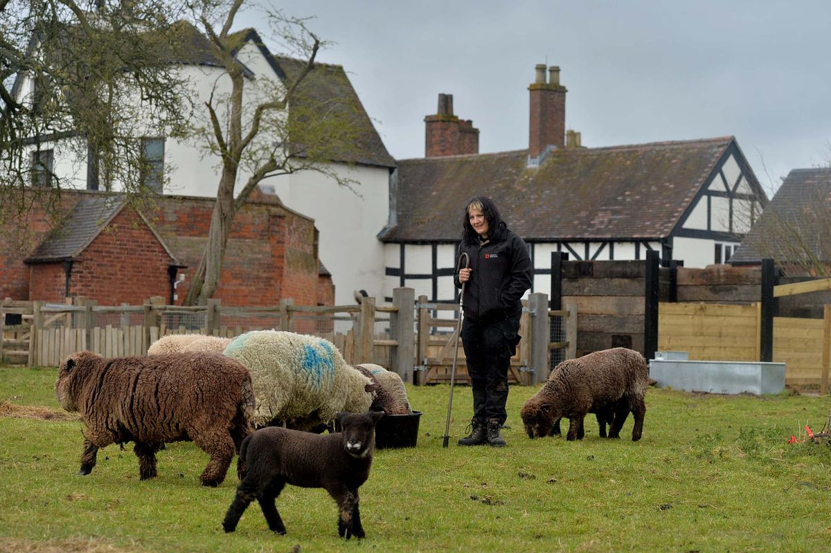 Kyra Povey from Lichfield is pictured with Shropshire & Ryland Sheep