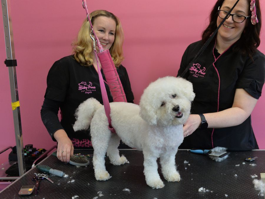 Angela Warrington and Clare Pace opened Stinky Paws Pet Parlour 18 months ago