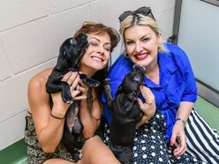 Jodie Prenger takes break from Annie role to visit Birmingham Dog's Home - with pictures