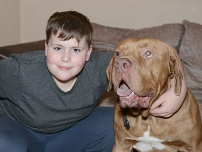 Family's desperate plea for help to save paralysed dog Ozzy