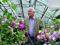 David Austin Roses busy building this year's Chelsea Flower Show display