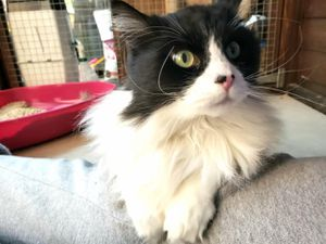 Mylo now, ready to find his purrfect home