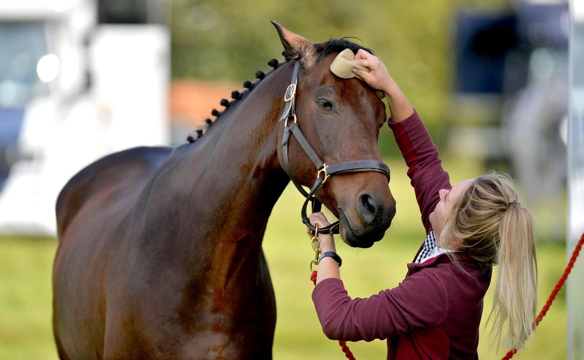 Alice Bibby from Wiltshire with Chantilly Royale II