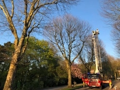 Firefighters rescue cat from 65ft high tree in Dudley