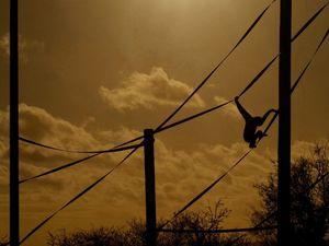 Twycross at Twilight