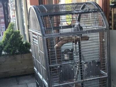 Welfare officer left 'speechless' after parrot abandoned outside restaurant