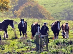 Nineteen horses found homes after being rescued from land in 15-hour operation