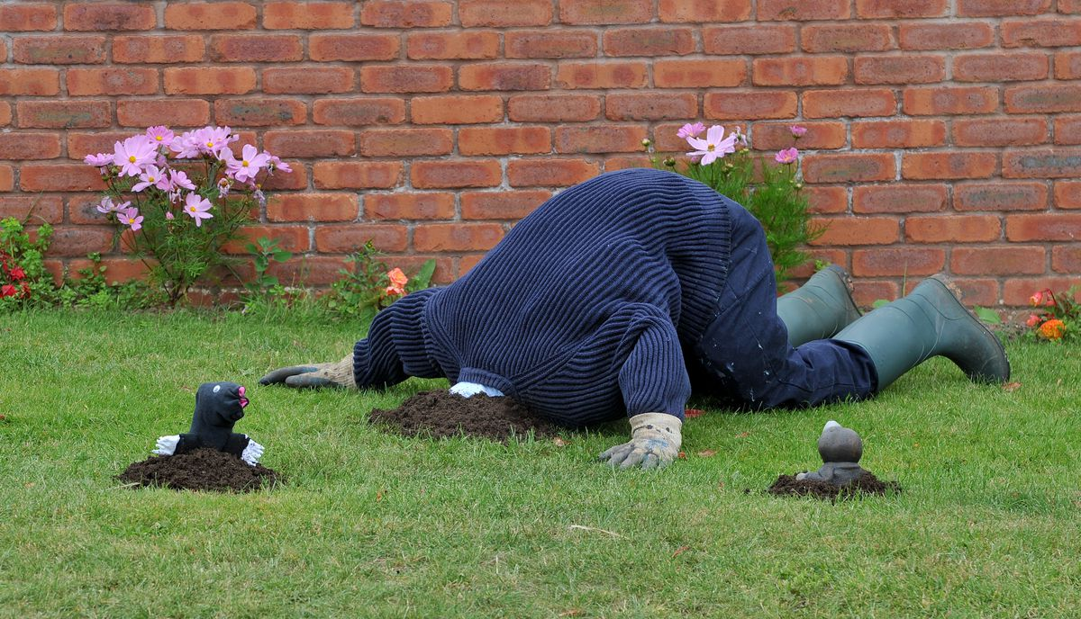 Dozens of scarecrows line the streets of Cresswell, Stafford, for a scarecrow competition, one of the winning entries