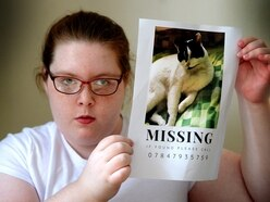 Heartbreak as cat that 'recognises seizures' goes missing