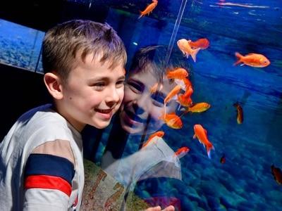Aquarium opens to improve children's mental health in Wolverhampton