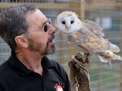 £900k owl sanctuary project scrapped after two years