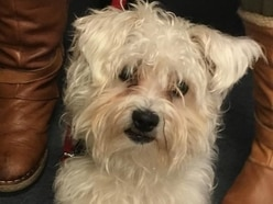 Family reunited with pet dog six months after he was stolen in Wyre Forest