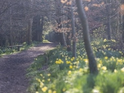Nature lovers asked to contribute to online diary to mark start of spring