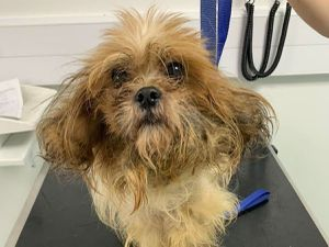Roo was abandoned in Birmingham. Photo: RSPCA