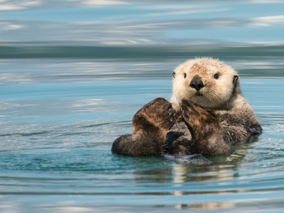 Peter Rhodes on otters, trials without juries and the lurking menace of TB