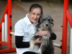 Crufts: Hope for Tipton's Hannah, 16, up for Young Kennel Club's Outstanding Person of the Year