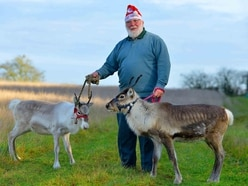 Reindeers get ready to ride at Owl and Falconry Centre