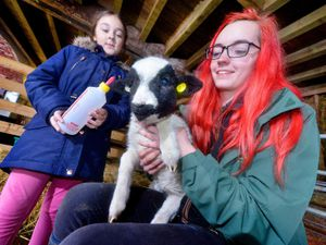 Molly the lamb with Ashante Gott 9 from Willenhall and Farm Apprentice Millie Garbett from Wednesbury
