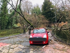 Road blocked after tree falls on car with family inside