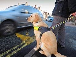 Peter Rhodes on MPs who quit, travel agents who prosper and activists who target guide dogs