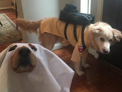 These Ghostbusting dogs are the most popular hounds on the internet right now