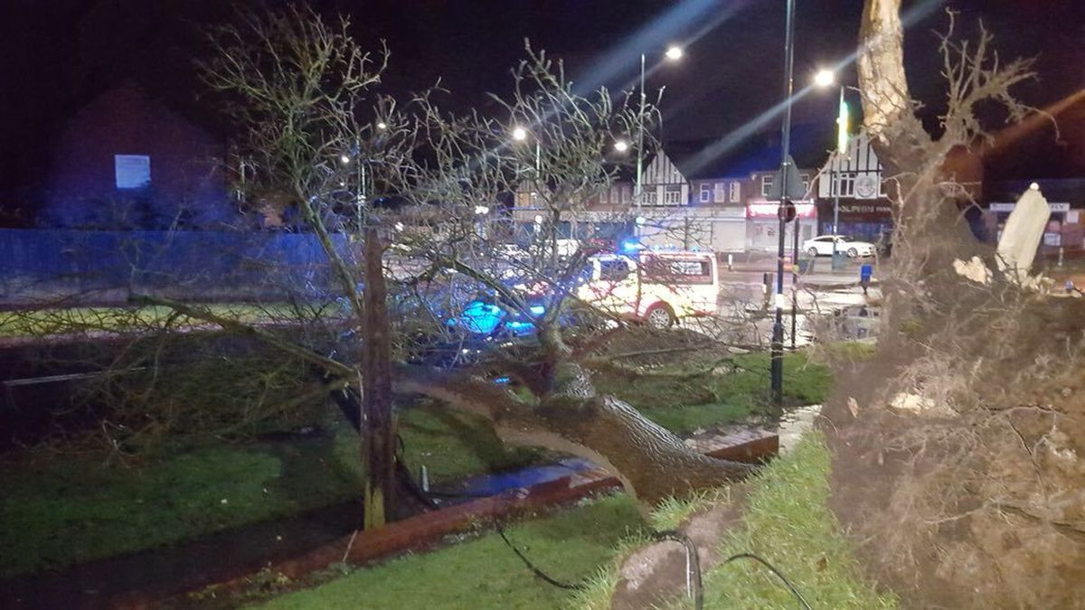 West Midlands Fire Service crews tweeted this picture of one of the trees to fall in strong winds overnight