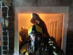 Iguana on firefighter's helmet