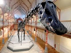 Dippy the Dinosaur making its way to Birmingham