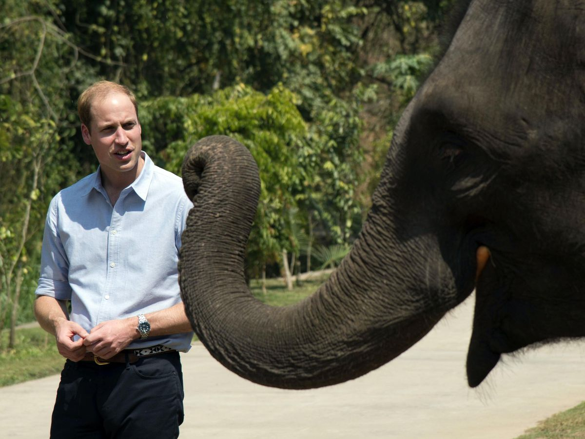 The Duke of Cambridge has praised the Financial Action Task Force for its report on the illegal wildlife trade