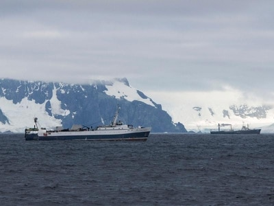 Holland and Barrett pulls krill products after Antarctic wildlife warning