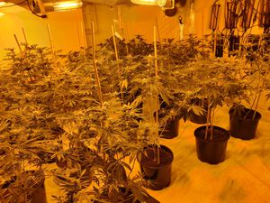 Around 150 plants were found at the property in Smethwick (Image by West Midlands Police)