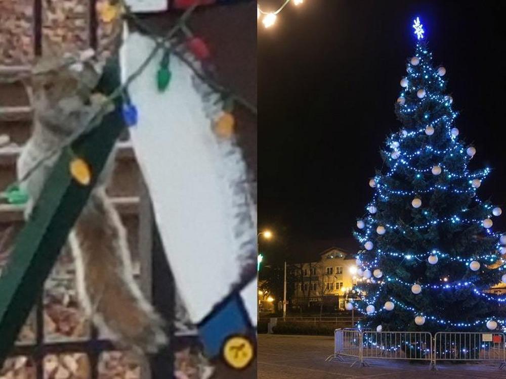 Image result for America Police Arrested Squirrel Damages Christmas Lights