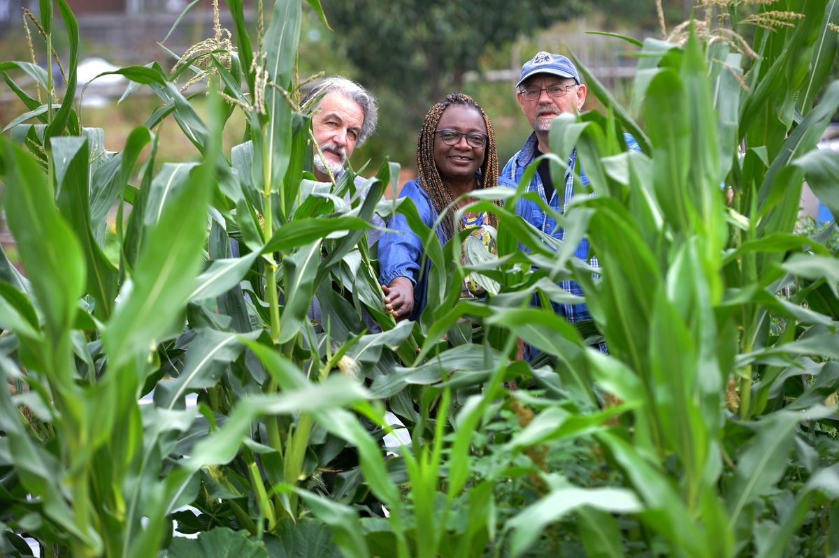 Alan Marriott, Florence and Geoff Gooding take a look through the Africa corn