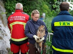 Owl retrieved from German well after 3.5-hour rescue operation