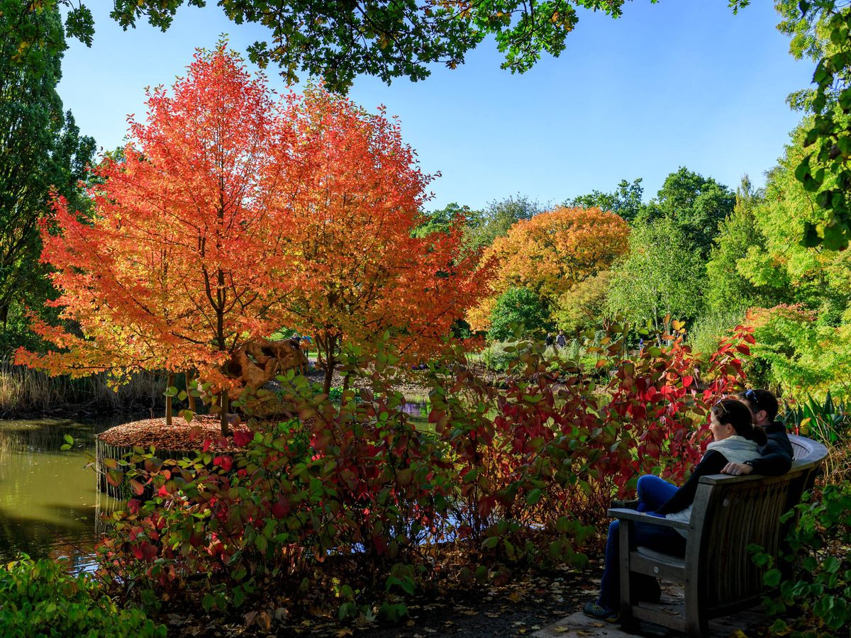Autumn is an important season for gardening (RHS/Oliver Dixon/PA)