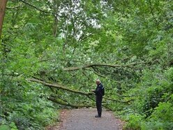 Stafford's Isabel Trail to fully reopen two weeks after tree fall death