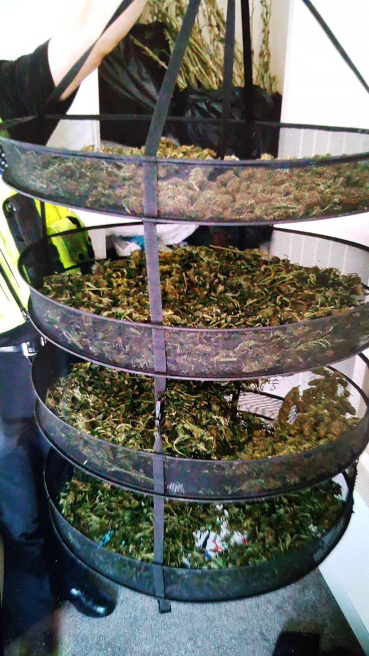 A quantity of cannabis found in Oldbury. Picture: @oldburywmp