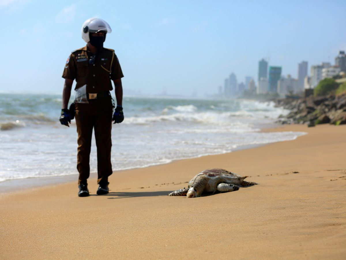 A Sri Lankan policeman looks at a dead turtle that washed ashore in Colombo, Sri Lanka