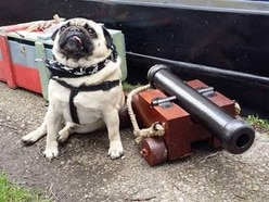 Cannon theft hits Tipton Canal Festival