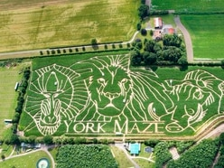In Video: Maize maze pays tribute to Lion King
