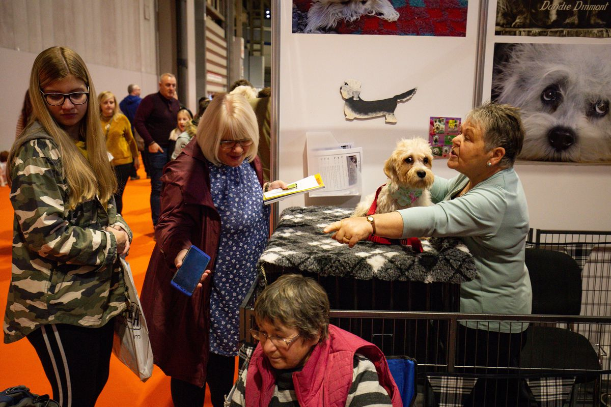 Visitors at the Dandie Dinmont Terrier stall at the National Pet Show at the NEC, Birmingham. PA Photo. Picture date: Sunday November 3, 2019.  Photo credit should read: Jacob King/PA Wire.