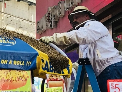 A swarm of bees settled on a hot dog stand in New York