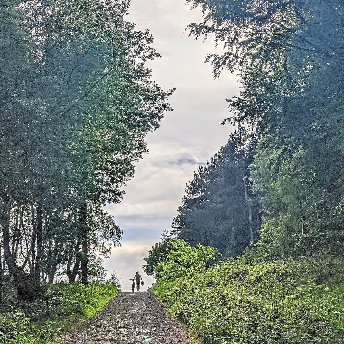 Back in the saddle – Sarah Giles captured this image of a lone cyclist in Cannock