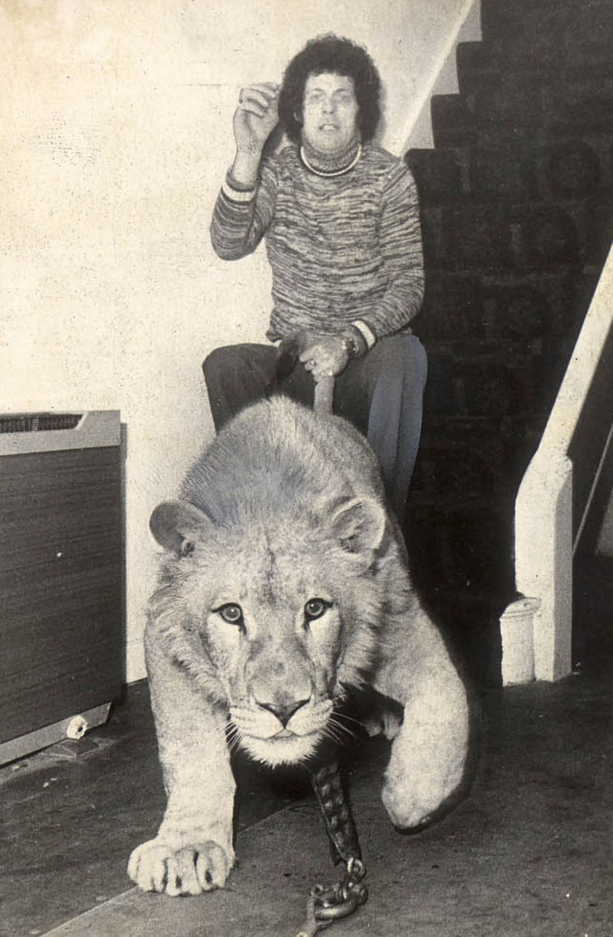 At home with the Foleys – Lew with a lioness