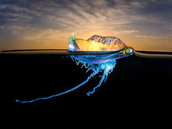 The most beautiful shots from the Nature TTL Photographer of the Year Awards