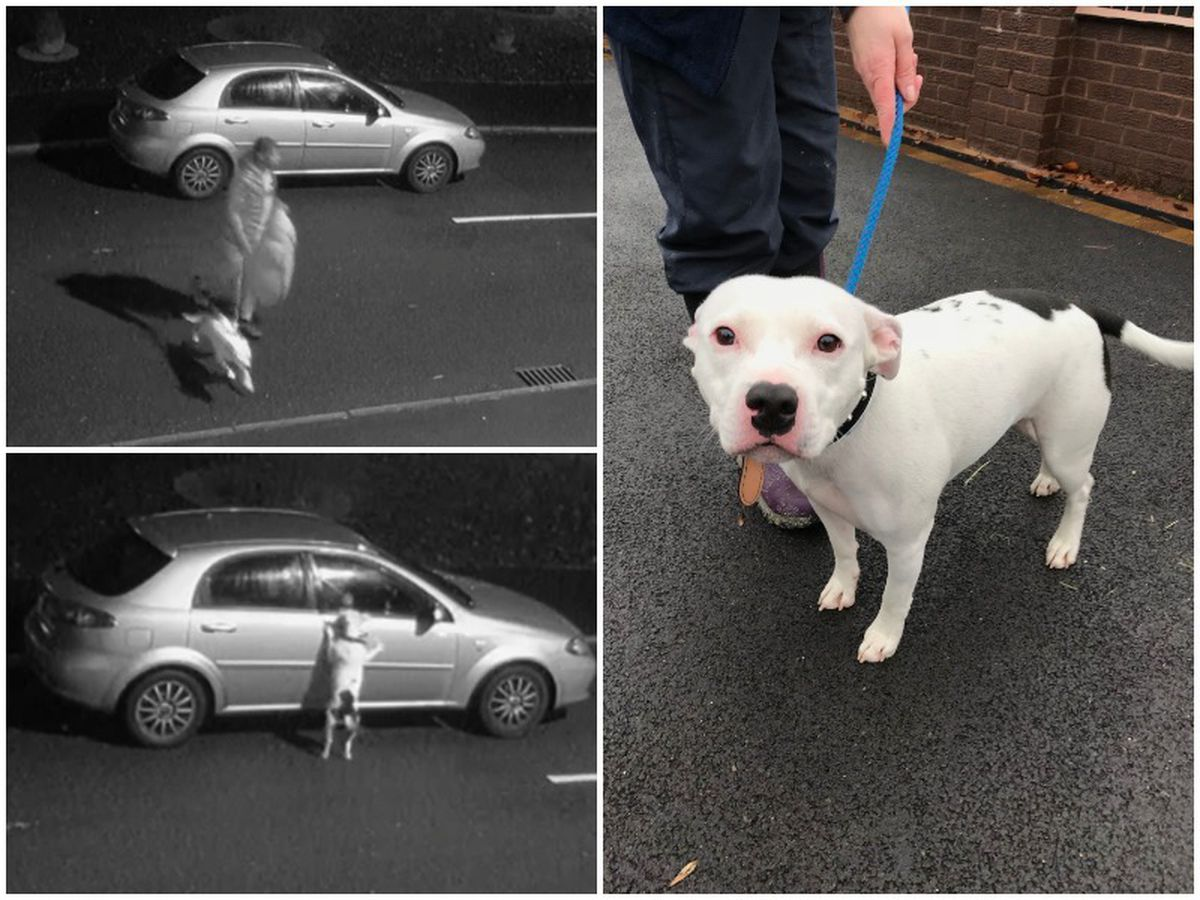 CCTV images show Snoop the dog being dumped by a man RSPCA officials want to speak with; and Snoop seen distressed at the window of the car; and later after being cared for by staff