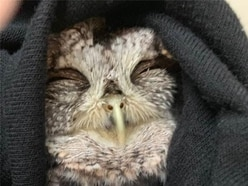 Retired Maryland police officer saves injured owl and names him Lil Screech