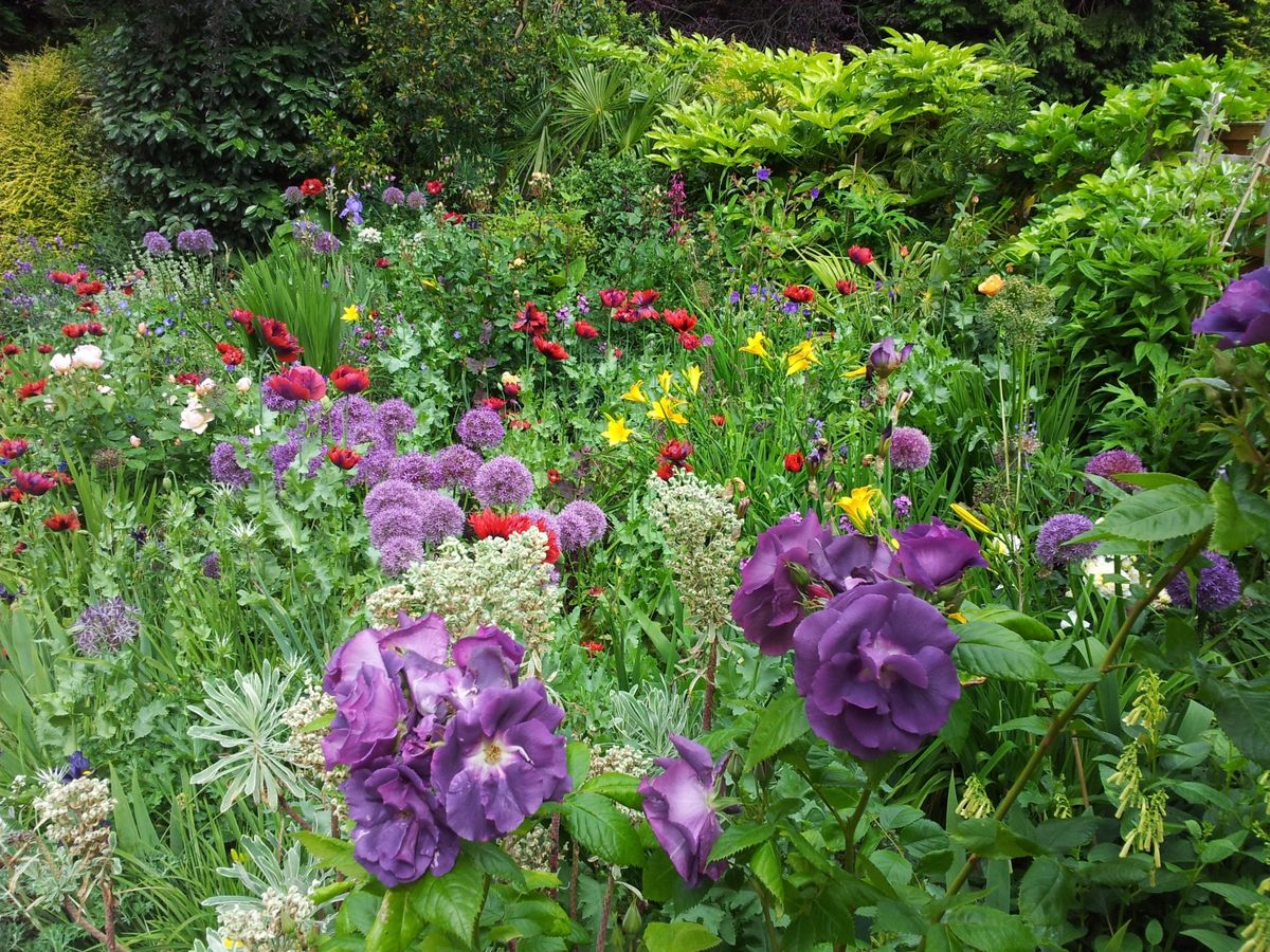 The surprise Wolverhampton garden