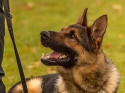 Suspect tracked down by police dog after allegedly breaking woman's arm
