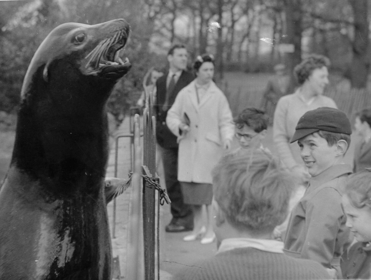 Visitors at Chester Zoo through the ages